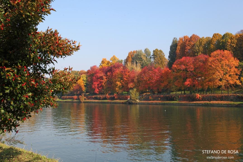 Foliage a Torino