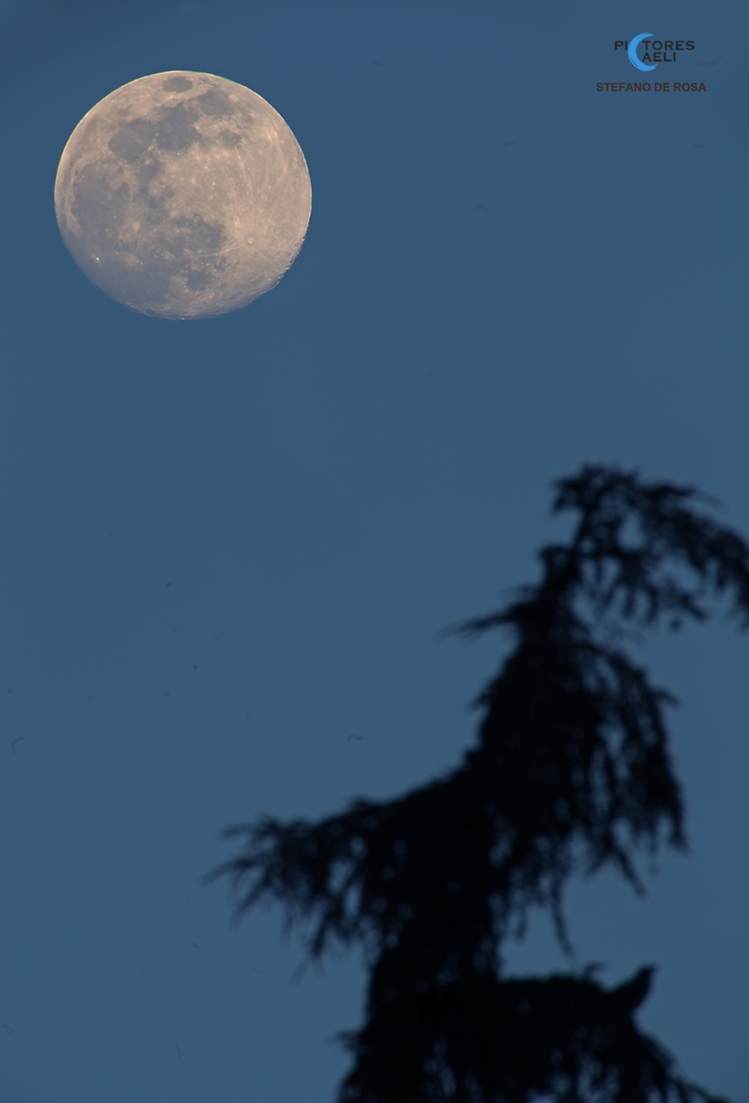 Waiting for the SuperMoon_2