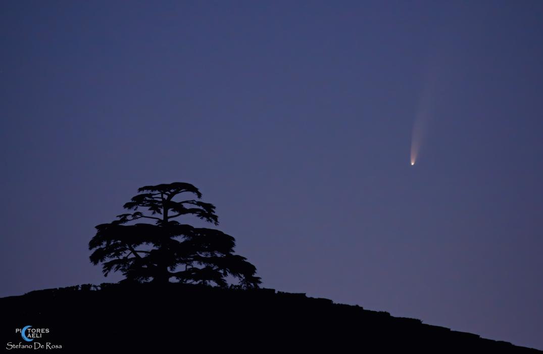 Comet Neowise e Cedro del Libano